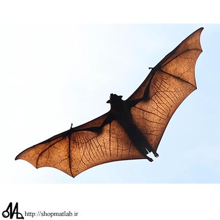ghj1gh الگوریتم فراابتکاری بهینه سازی خفاش در متلب